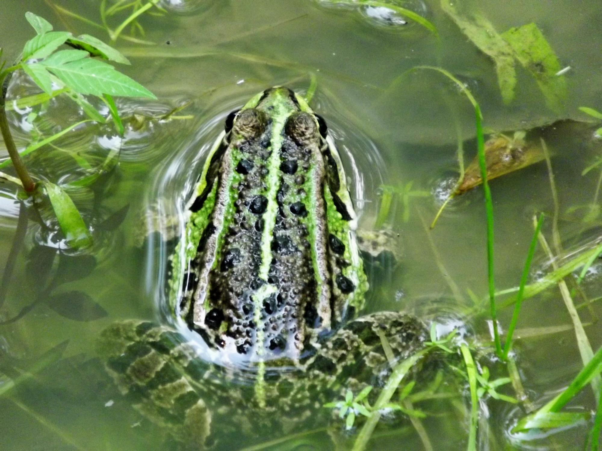 Přírodní rezervace stibůrkovská jezera