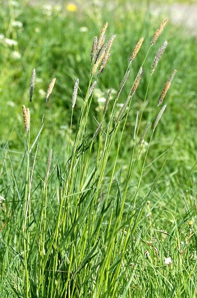 какие травы от паразитов