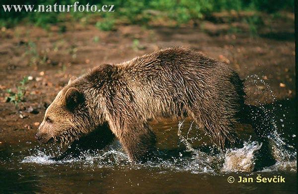 Online pujcky ihned židlochovice akce photo 9