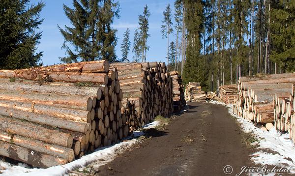 Kácení stromů ma šumavě je podle ministra nutné ale jen za