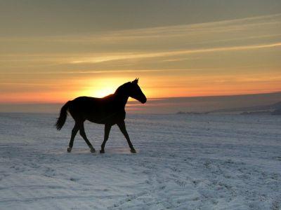 Kůň na pláni