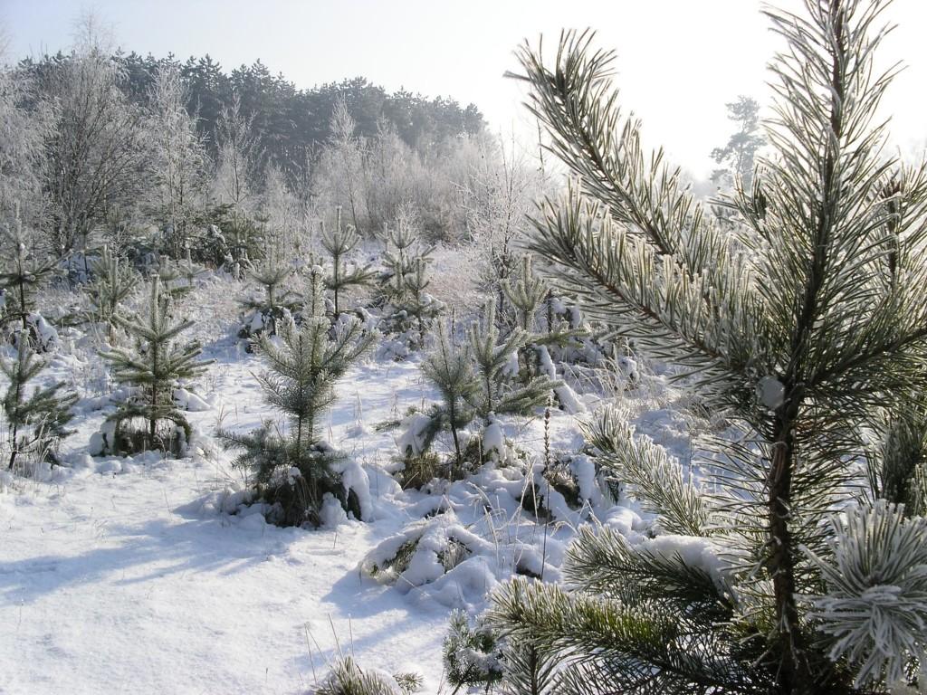 http://www.priroda.cz/pozadi/zima.jpg